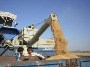 grain-harvest_w363_h272