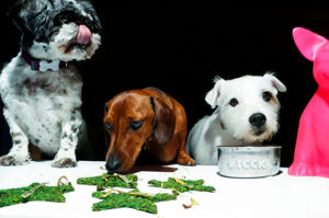 LOW RES Group Dogs Dining
