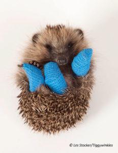 Injured-hedgehog