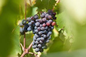 wine-989272_1280