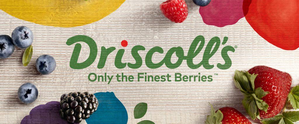 driscolls_banner