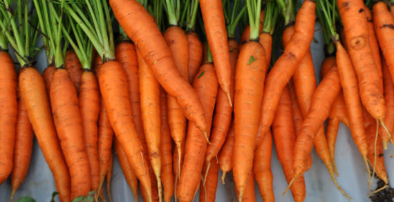UK Carrot Growers Break New Ground with Organic Promotion